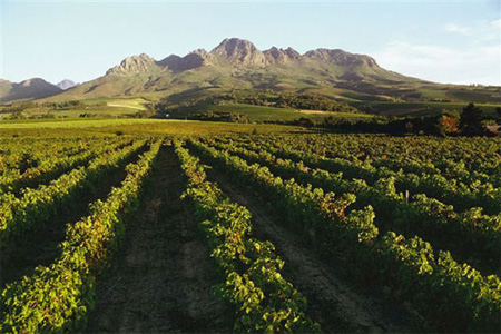 Tourism boosts wine sales for Jardin wine south africa