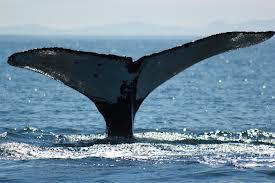 WhaleTales