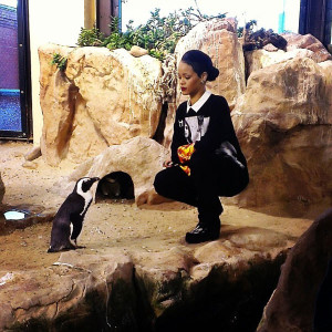 Rihanna Aquarium