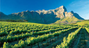 Winelands Winetimes