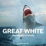 Chris Fallows Great White The Majesty of Sharks