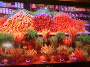 MasterChef 3 5 Carrots Whale Cottage