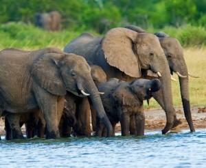 Zu Gast Elephant